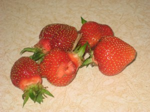 A handful of juicy, early strawberries